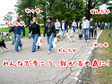 pawsinwalk17.jpg