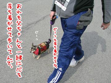 pawsinwalk19.jpg