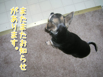 wanconokimochi1.jpg