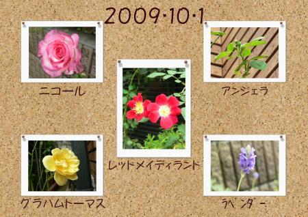 091001rose6.jpg