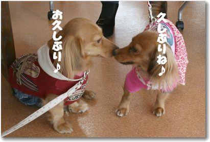 kissD_5771.jpg