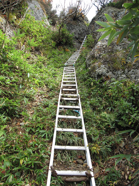 長いはしご