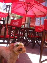 今日のレストカフェ・キンタナ