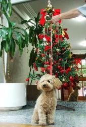 マンションのホールのクリスマスツリー