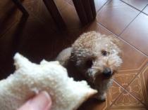 パンが食べたい!