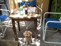 何時ものごとくテーブルの下。。。