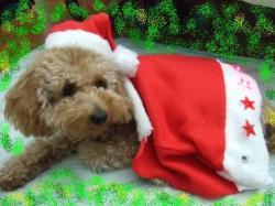 クリスマスです~♪