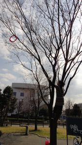 20120303002.png