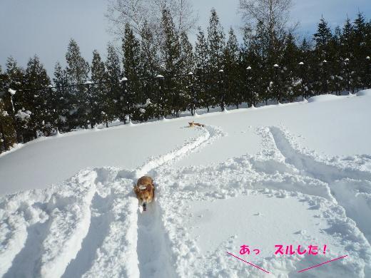 10_20110128134109.jpg