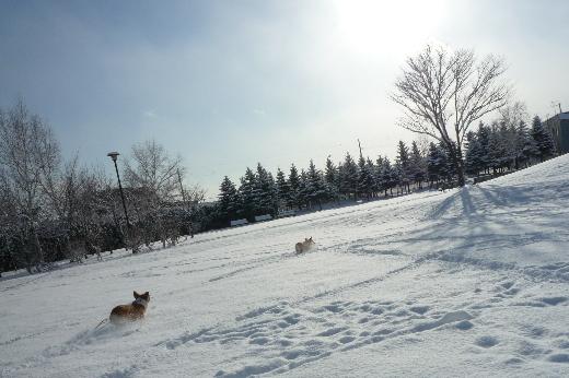 1 冬景色