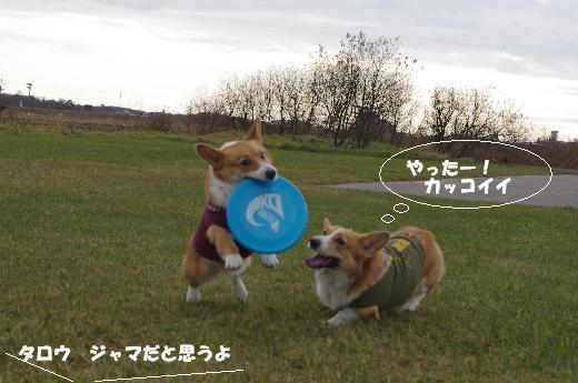 CoCoちゃんカッコイイ