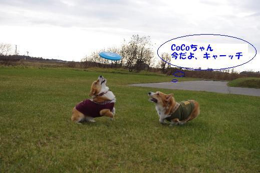 CoCoちゃんキャッチ