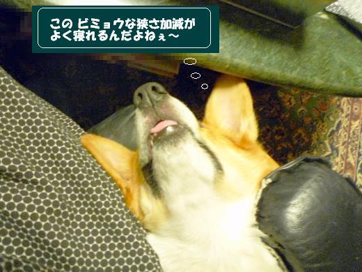2_20110126160755.jpg