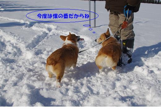 3-1_20110117222045.jpg