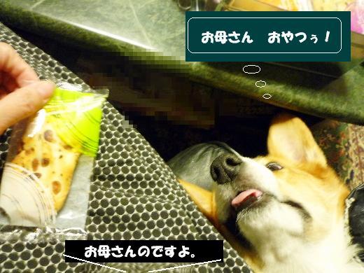 3_20110126160754.jpg