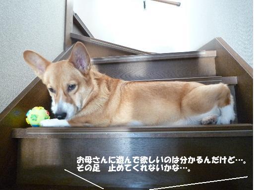 4_20110105132341.jpg
