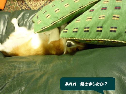 4_20110107141143.jpg