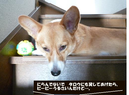 5_20110105132341.jpg