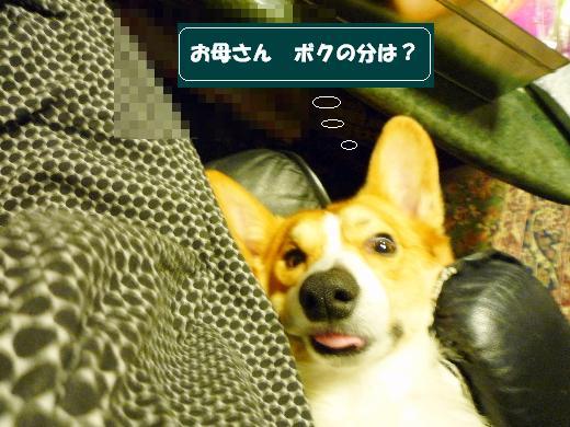 6_20110126160754.jpg
