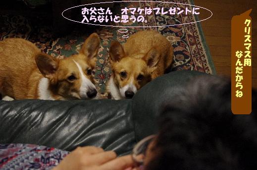 7_20101209134717.jpg