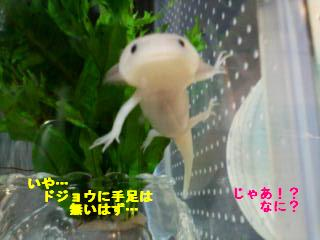 ニア☆ドジョウ2