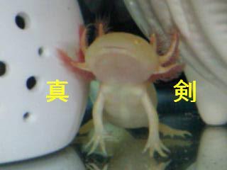 メロ☆受信中2