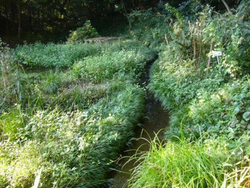 水みち探訪-かきつばたの湿地