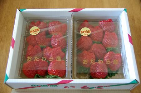 101231-25sachinoka.jpg