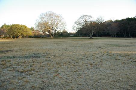 101211-01serizawa park