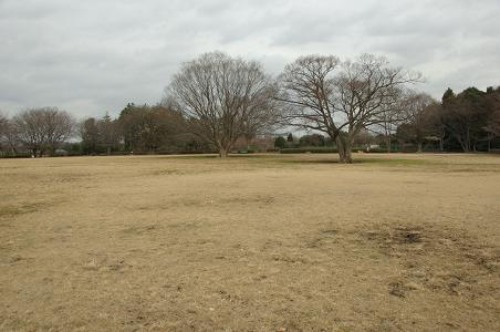 101230-01serizawa park view