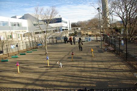 110101-09dog run
