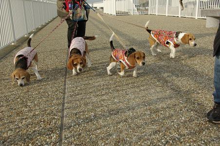 110115-02cooky,chara,sumomochoko walk