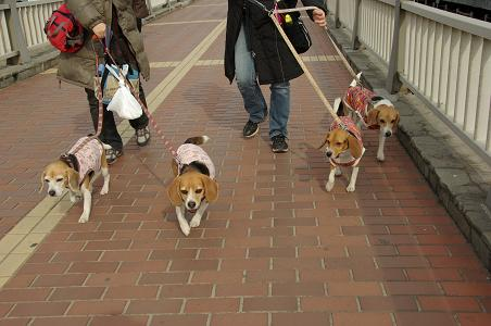 110115-32cooky,chara,sumomochoko walk2