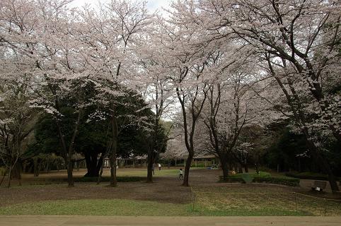 110410-33shiroyama park2