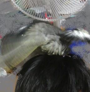 風を浴びる龍ちゃん