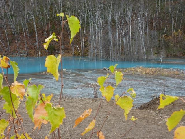 257青池と木