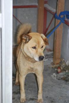被災地の犬たち