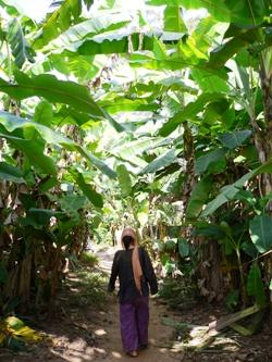 バナナの木の下