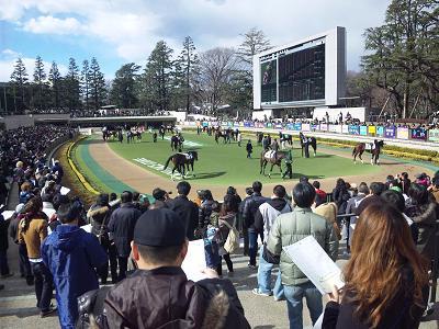 110130_121627東京競馬