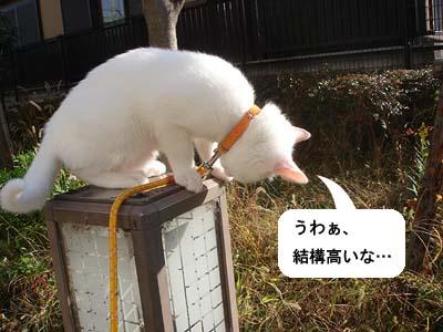 cat102