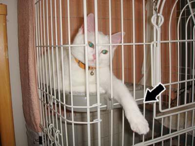 cat108