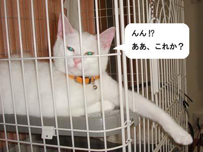 cat109