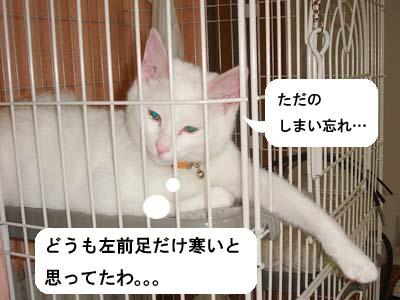 cat110