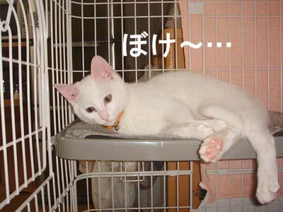 cat115