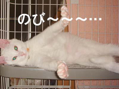 cat117