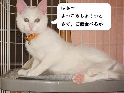 cat118