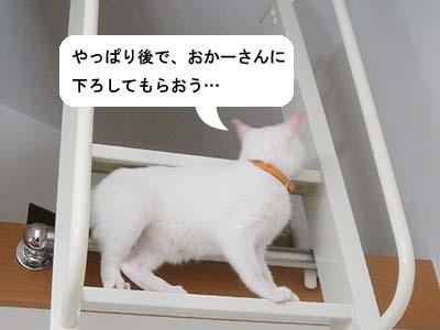 cat121