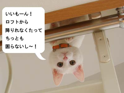 cat124