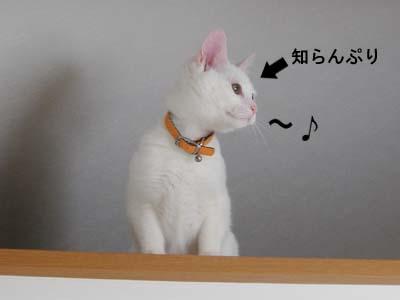 cat125
