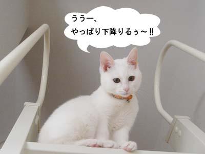 cat126